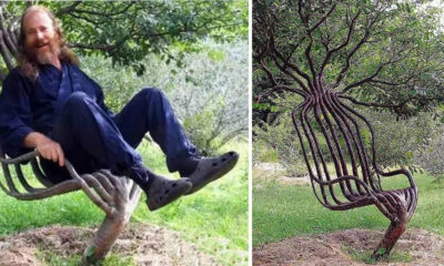farmer makes chair out of tree