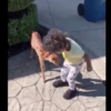 When Tiny Deer Meets Tiny Human