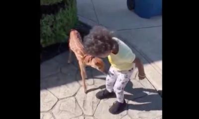 When Tiny Deer Meets Tiny Human
