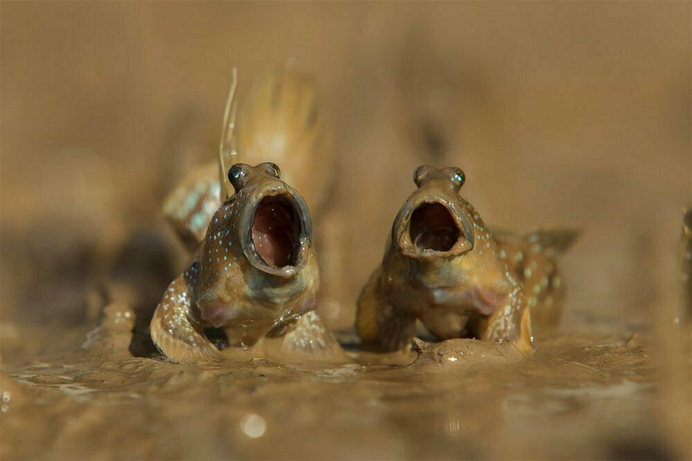 frogs sing